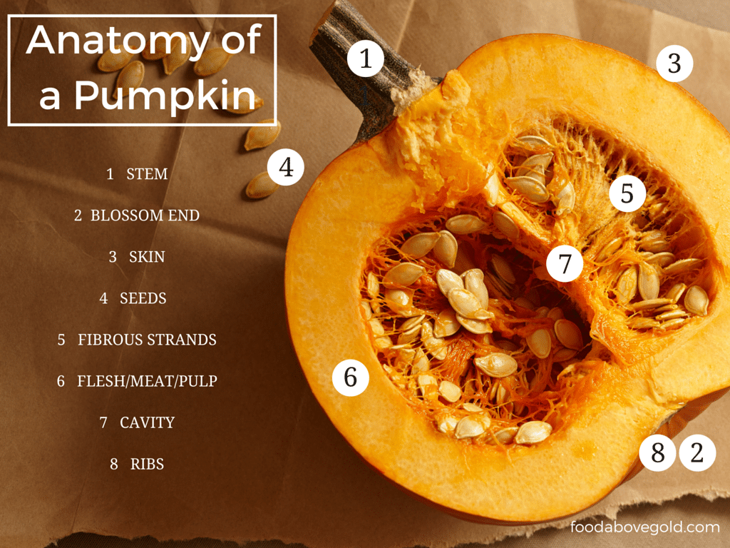 Image result for parts of a pumpkin