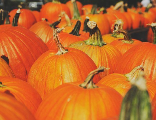 Learn how to cook pumpkin by roasting, baking, sautéing and in the slow cooker. Use these methods to make delicious recipes whether as pieces or as purée.