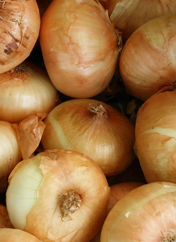 a bunch of yellow onions crowded together
