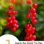 Two strings of red currants and 1 hack for how to de-stem currants quickly text