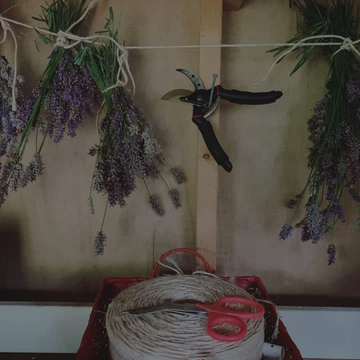 Black overlay on a picture of drying lavender hanging from twine.